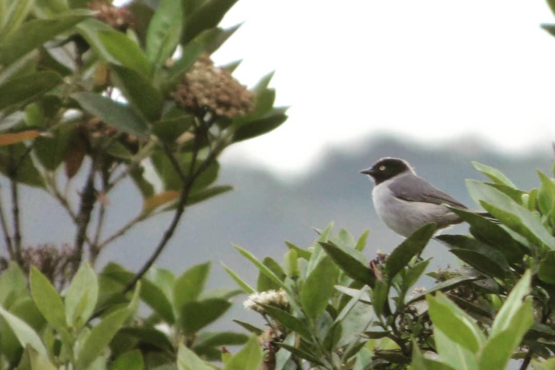 Bienestar a través de las Aves -Reserva natural Los Tapaculos.