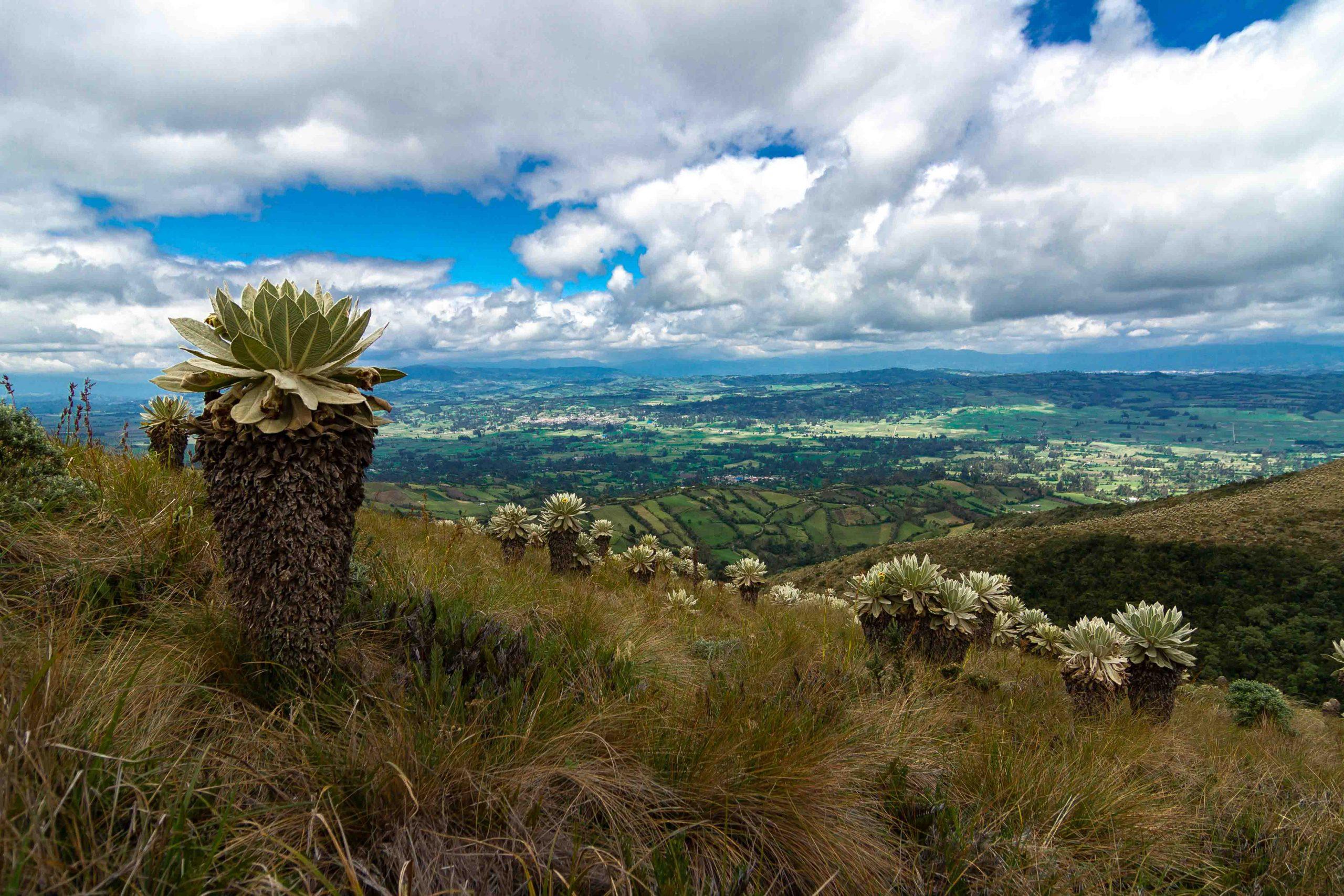 Tierra de Volcanes, Pasto