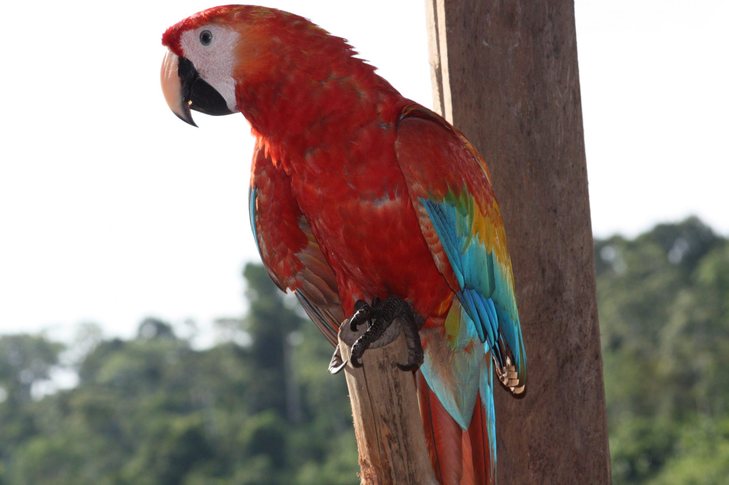 Escápate a mundo Amazónico