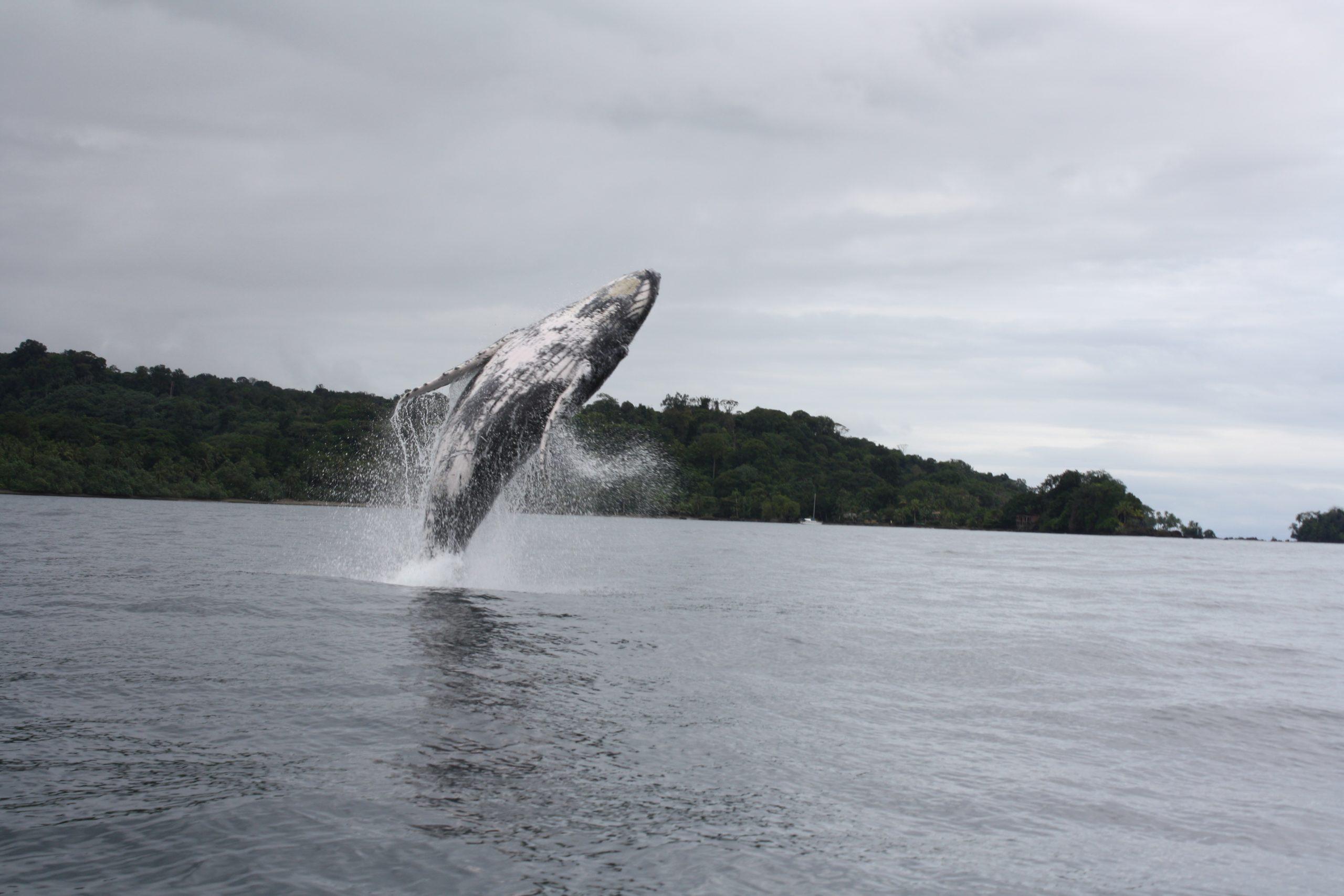 Buscando las Ballenas, 4n 5d Bahía Solano