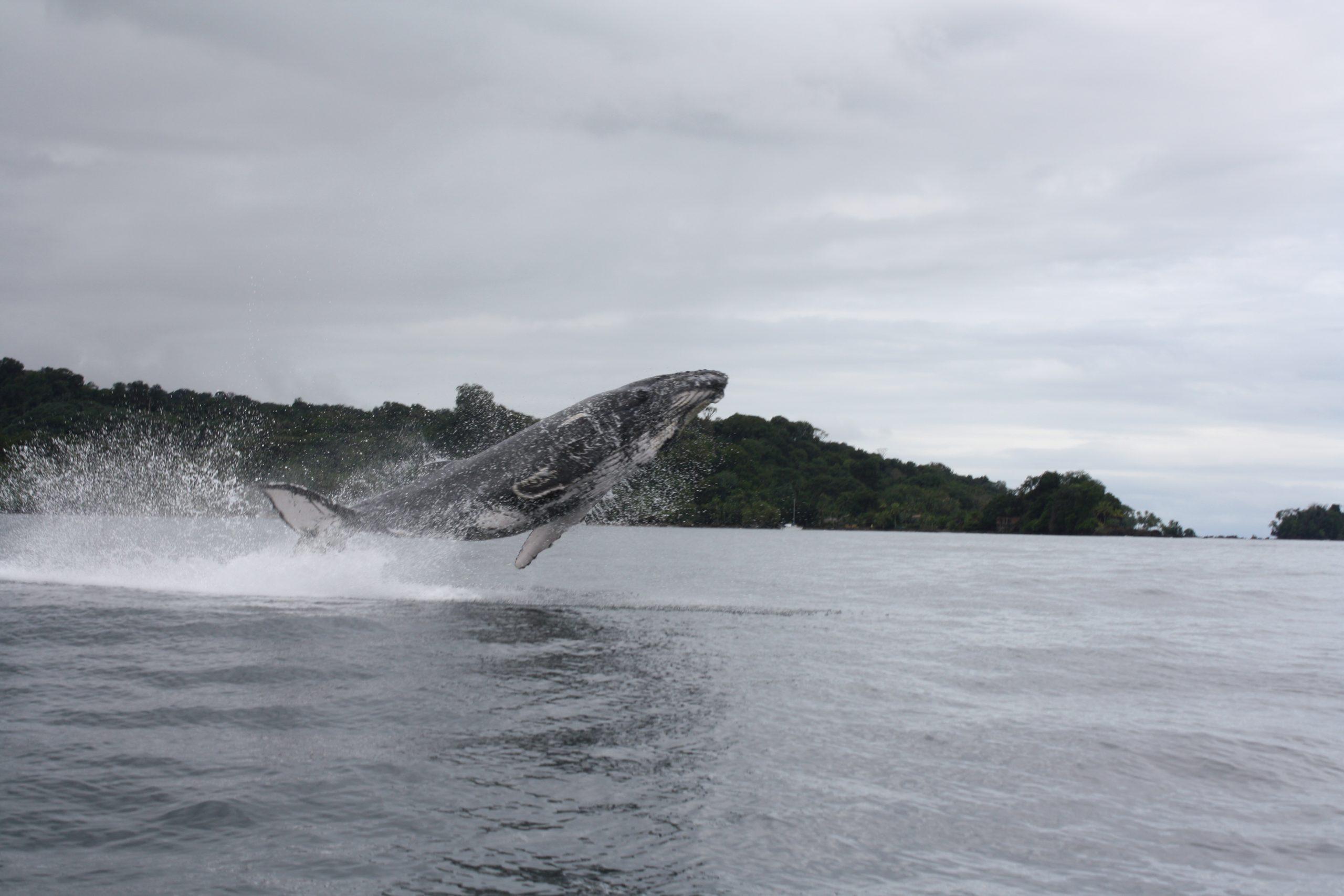 Buscando las Ballenas, 3n 4d Bahía Solano